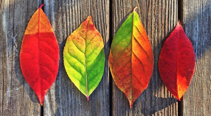 Herbstferien 17.-28.10.2016